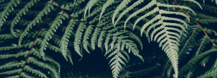植物 PLANT